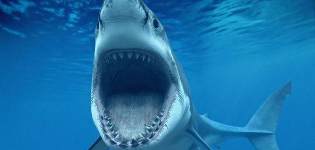 Tubarão-branco de quase 3 metros é devorado por criatura misteriosa