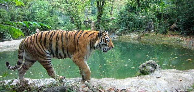 50% dos animais da Terra desapareceram nos últimos 50 anos