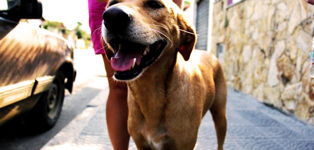 A ciência comprova: seu cachorro realmente tenta falar com você