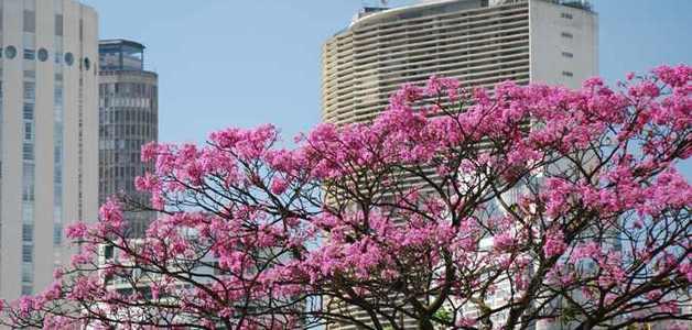 Bairros com mais árvores têm apartamentos mais valorizados