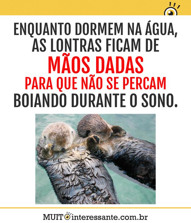 Enquanto dormem na água, as lontras ficam de mãos dadas para que não se percam boiando durante o sono.